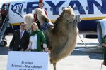 Ryanair Cancels 30% Of Its Morocco flights