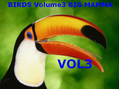 Birds Volume 3 for FSX