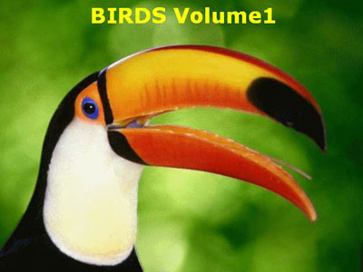 Birds Volume 1 for Hawaii Oahu