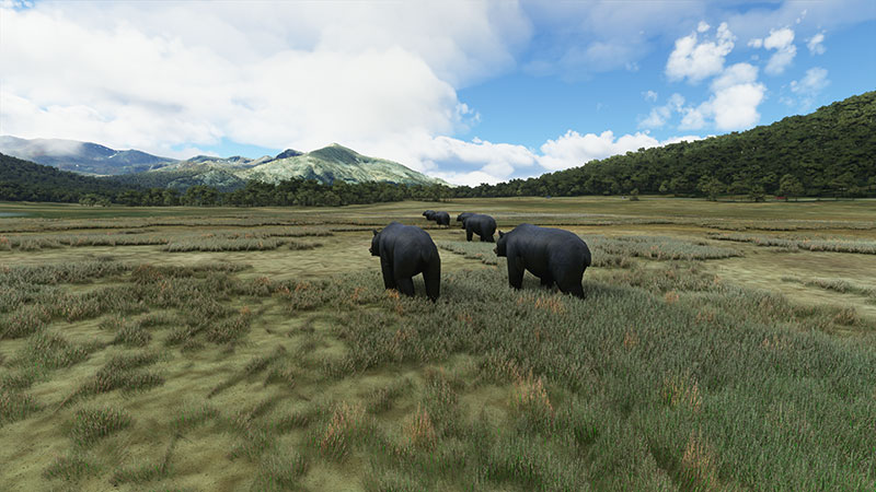 Wild roaming bears in the simulator.