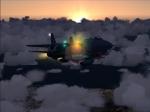 Tomcat with sun glare