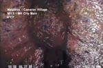 Unknown lifeform found in sewer